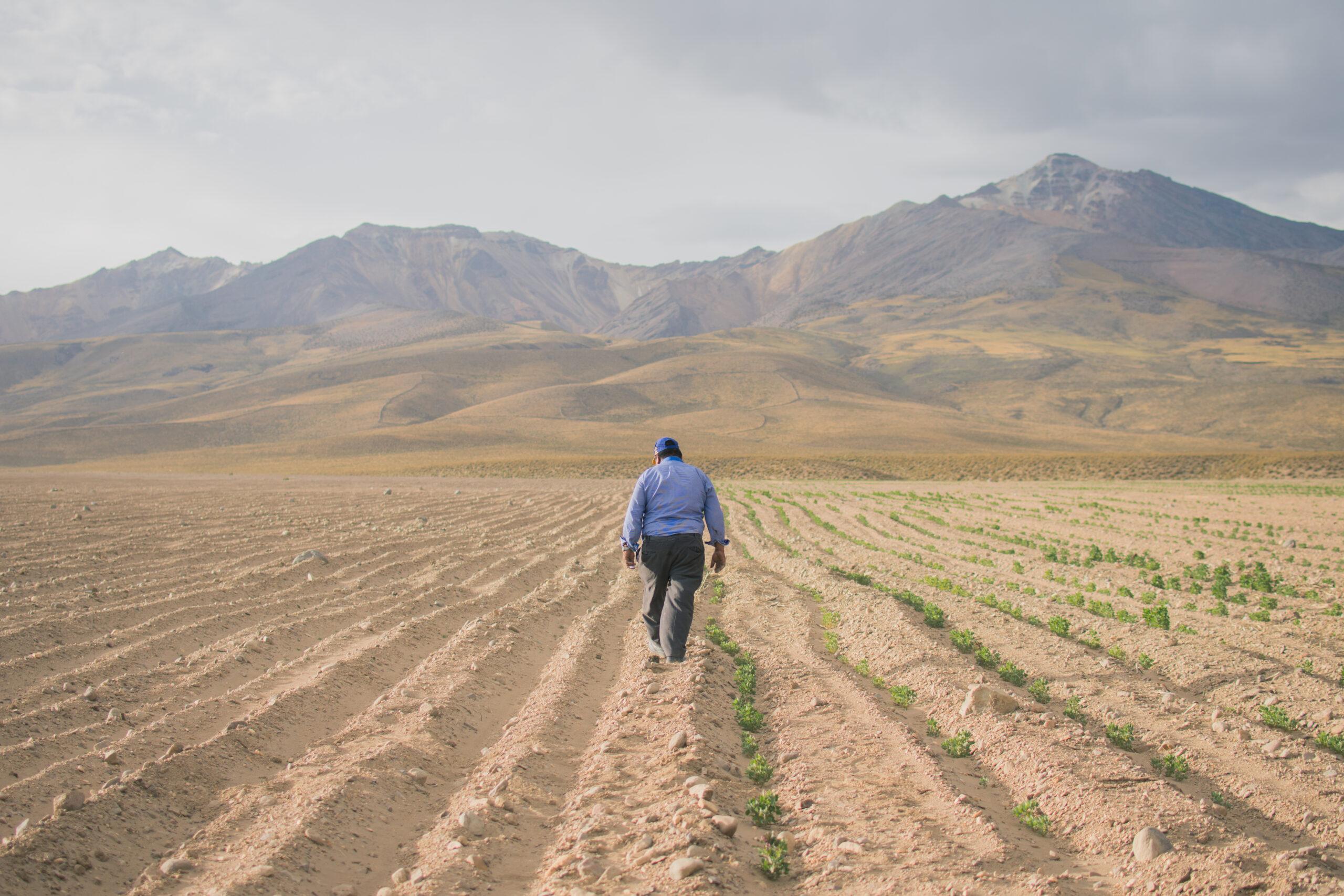 La quinua, el grano de oro golpeado por la crisis climática