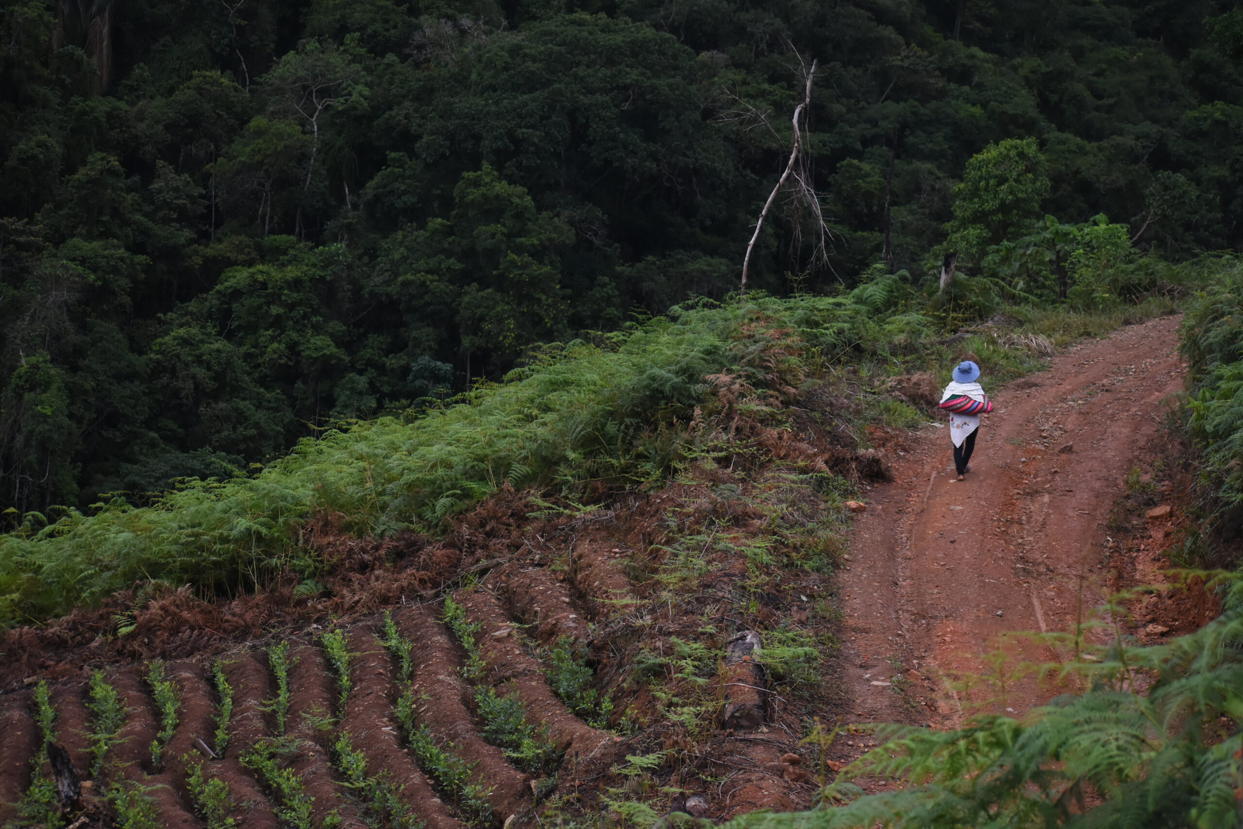 Cultivadoras de coca: entre violencias, luchas y resiliencias